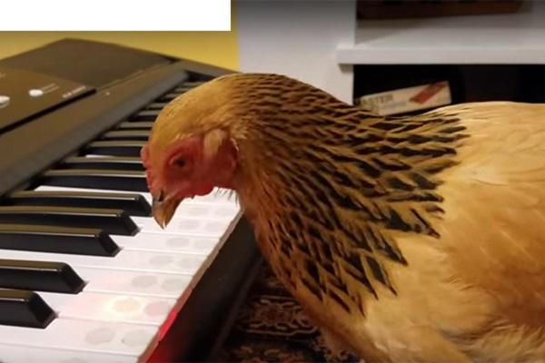 """Cô """"ngôi sao ca nhạc này"""" là thành viên của một ban nhạc gà nồi tiếng nước Mỹ"""