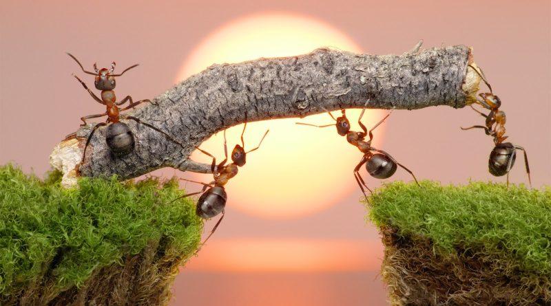 Tìm hiểu kĩ lưỡng điềm báo tương lai qua giấc mơ con kiến