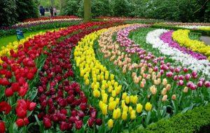 mơ thấy bông hoa