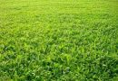 Mơ thấy cỏ có phải là điềm xấu