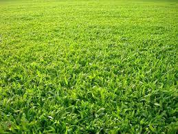 Mơ thấy cỏ