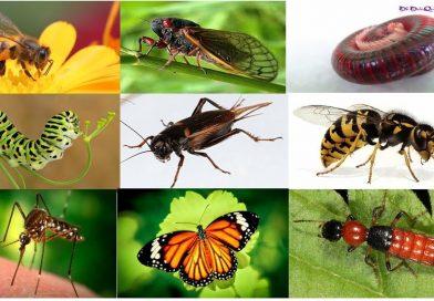 Ngủ mơ thấy côn trùng có con số may mắn gì