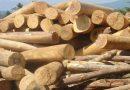 Ngủ mơ thấy những khúc gỗ nên đánh con số gì