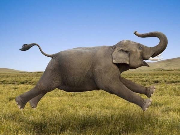 Nằm mơ thấy voi là điềm gì? Đánh lô đề con nào?