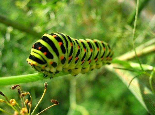Mơ thấy sâu bọ có ý nghĩa gì, đánh con lô đề nào trúng?