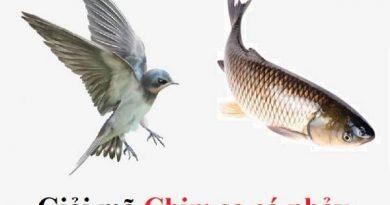 Chim sa cá nhảy là gở hay lành? Nên đánh số nào